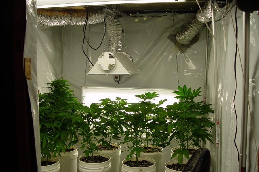 Grow Room & Grow Tent Ventilation Setup For Proper Intake and Exhaust