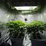 What you need from a grow tent kit in South Africa - gevaaalik.com