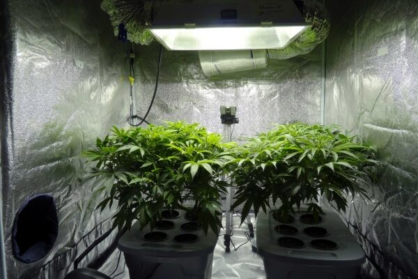 Creating Your Own Indoor Growing Kit Can Save You Money – Here is How